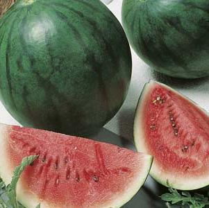 Seed – Water Melon Sugar Baby