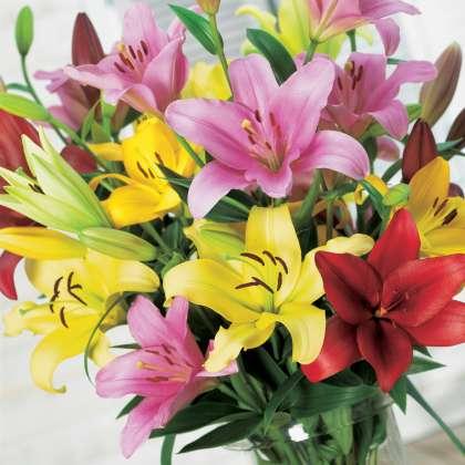Lilium Hybrid Mixed 13 - Garden Express Australia