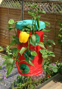 Hanging Chilli & Strawberry Planter