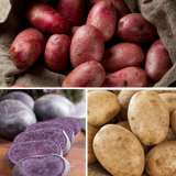 Seed Potato Winter Collection 2