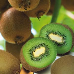 Kiwifruit One Male & One Female