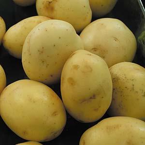 Potato Colliban