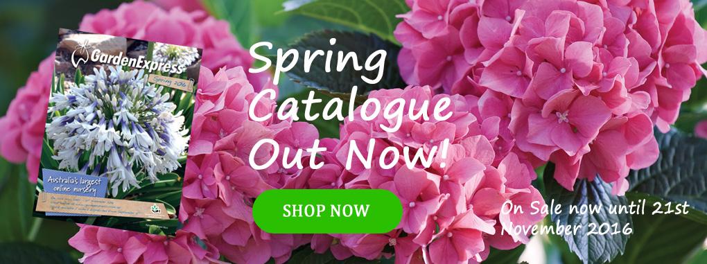 Spring-2016-HomePage-2
