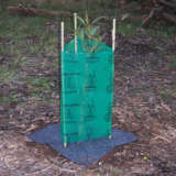 Tree Guard & Stakes