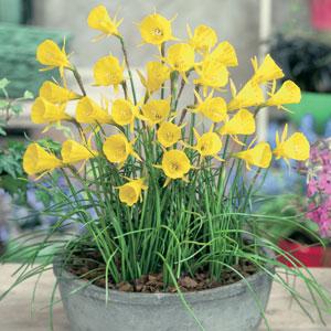 Daffodil Hoop Petticoat Yellow