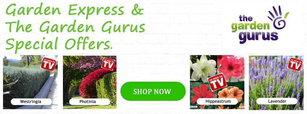 GurusSpecials-homepage-2016-2