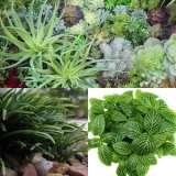 Mini-Garden-Plant-Col-1