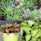 Mini-Garden-Plant-Col-2