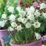 Daffodil-Hoop-Petticoat-White.17