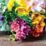 Freesia-Double-Mixed-17