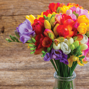 Freesia Giant Mixed