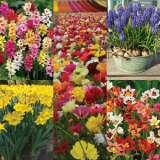 COLSPRFAV-2017-Springtime-Favourites-Collection