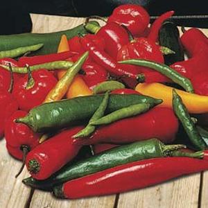 Seed – Chilli Pepper Chilli Shake