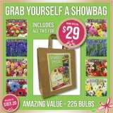 Spring Show Bag – 225 Bulbs