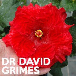 Hibiscus Dr David Grimes 2017