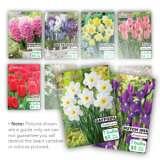 Bulbs Spring Flowering Archives Garden Express