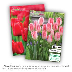 Mifgs Last Chance 6 Selected Tulip Packs