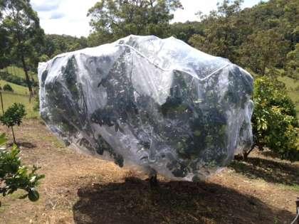 Large Fruit Saver Tree Net
