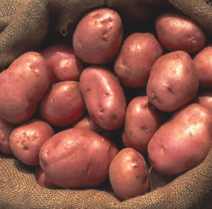 Certified Seed Potato Desiree