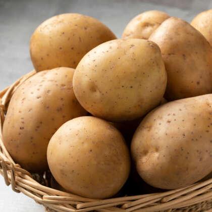 Certified Seed Potato Nicola
