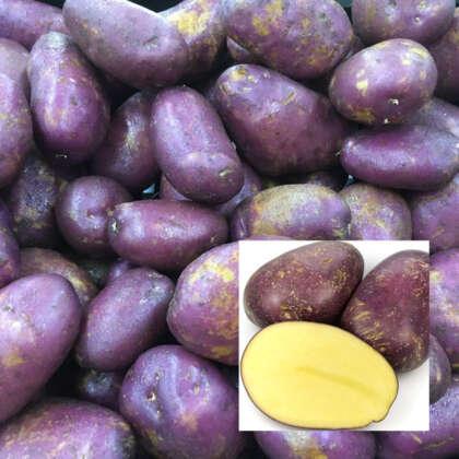 Certified Seed Potato  Royal Blue