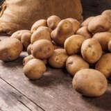 Certified Seed Potato Sebago