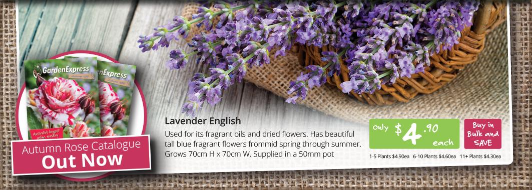 HP_Slider_Lavender
