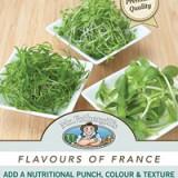 Microgreens-France