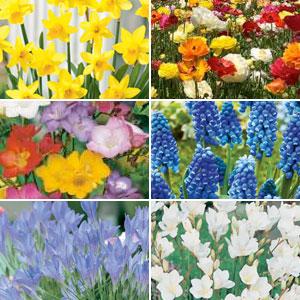 Spring Bulb Garden Collection