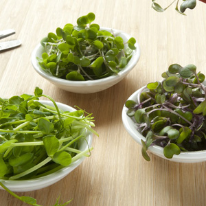 Microgreens Flavours Of Eastern Europe