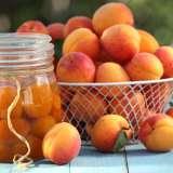 Dwarf Apricot Bulida