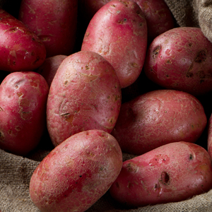 Certified Seed Potato – Red Norland