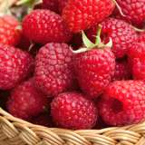 Raspberry Serpells Willamette