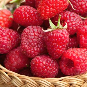 Raspberry Serpells Willamette