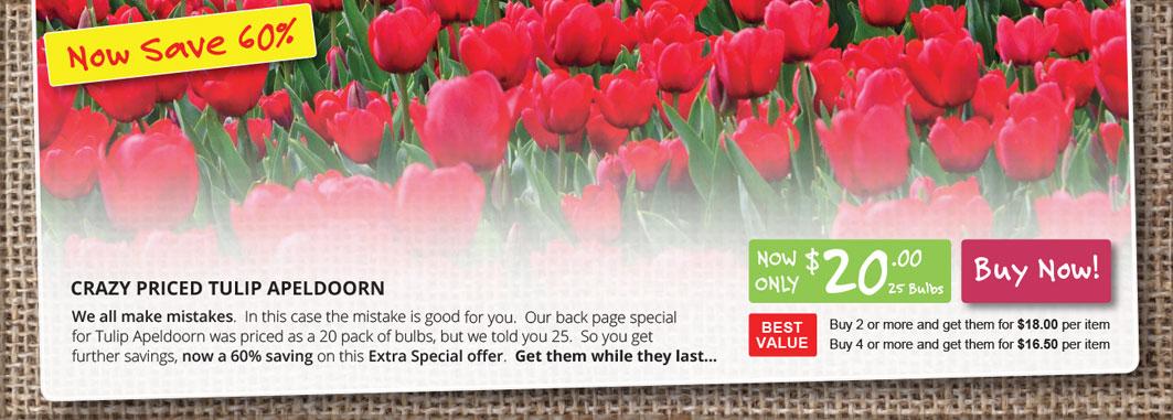 HP Slider Tulip Apeldoorn