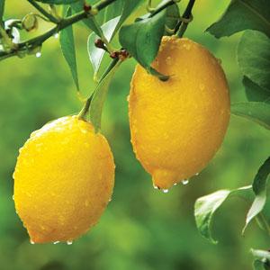 Lemon Lisbon