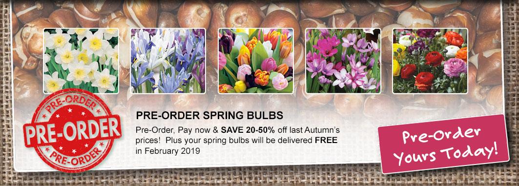 Pre Order Bulbs
