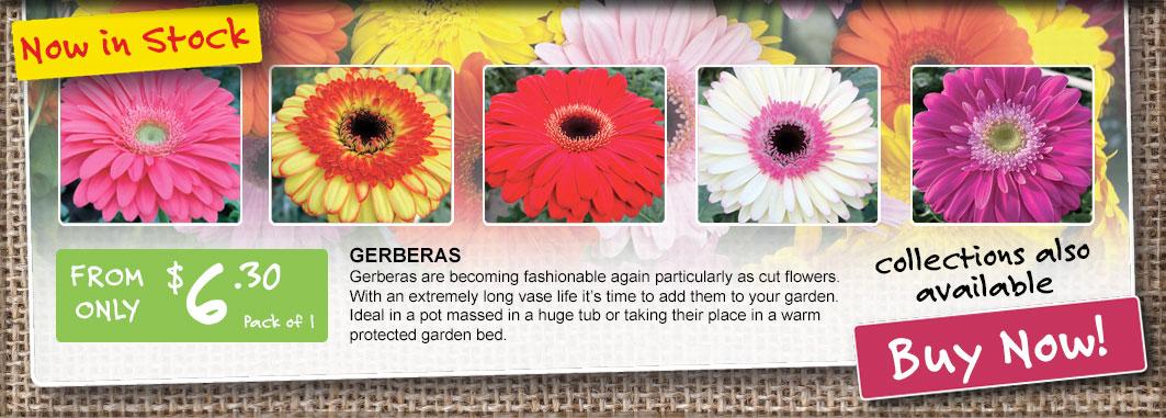 Ge Homepage Gerberas Now In Stock