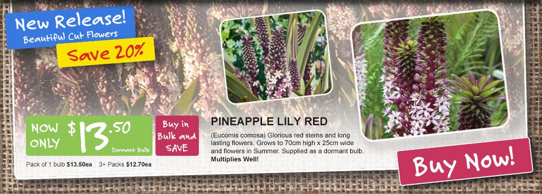 Ge Homepage Slider Pineapplelily