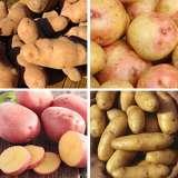 potato spring collection 1 2018 colcspsc1