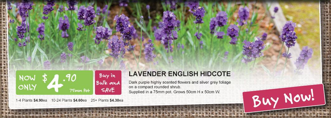 summer2018 lavender