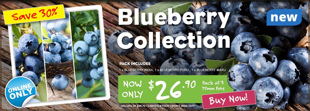 Ge Product Of The Week Slider Blueberries