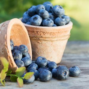 Blueberry Vitality