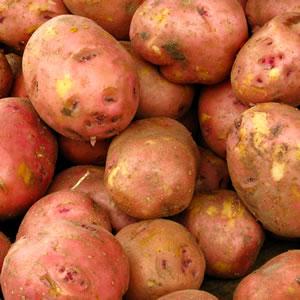 Certified Seed Potato Pink Eye PKCSPPEY