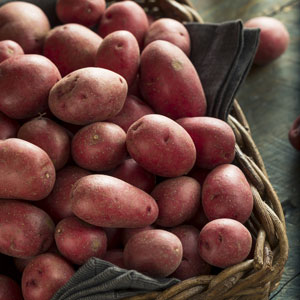 Certified Seed Potato Salad Rose