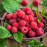Raspberry Nootka