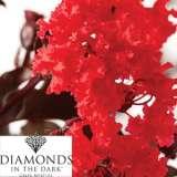 Diamonds In The Dark Crepe Myrtle Crimson Red