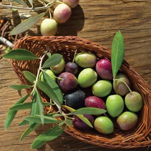 Dwarf Olive Garden Harvest