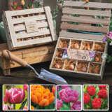 Tulip Desire Wooden Tea Box Collection