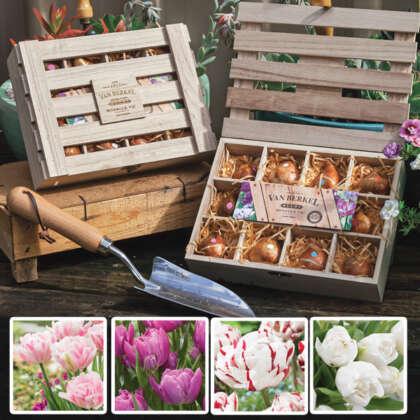 Tulip Romance Wooden Tea Box Collection